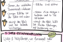 AgriKultur Graphic Recording_Heilpflanzenworkshop